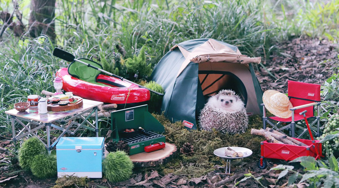 HEDGEHOG GOES CAMPING